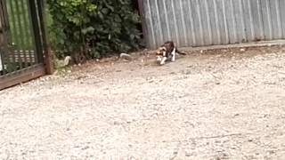 Popular Videos - Canidae & Cats
