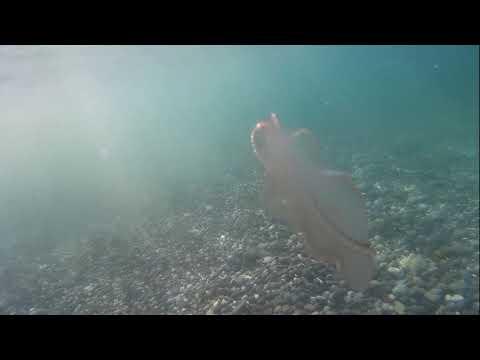 #КрымМеганом #Черное море #Судак #Море Крым. Пляж Меганом, подводный мир Черного моря