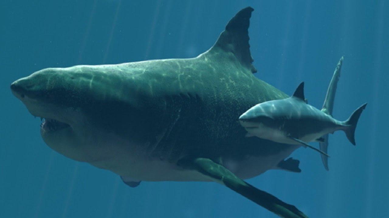 Riesenhai Megalodon