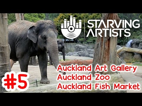 Auckland Art Gallery, Zoo & Fish Market in Auckland, NZ // Starving Artists Episode 5