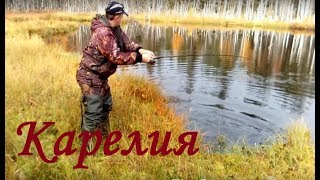 Рыбалка в Карелии. Щука в ламбушках.  Дикий клёв щуки.