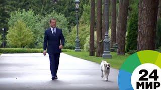 Медведев опубликовал видео с щенком алабая, подаренным Бердымухамедовым