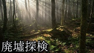 【2019年 本当に有難う!】#36『青木ヶ原樹海 ~dr.最期の回~』 《廃墟探検》