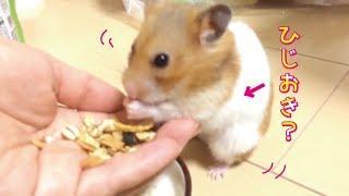 大好きな「ハムグラ」を食べているぽんちゃん。 飼い主の手から食べてく...