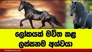 ලොව මවිත කරන සුන්දරම අශ්වයා - most handsome horse