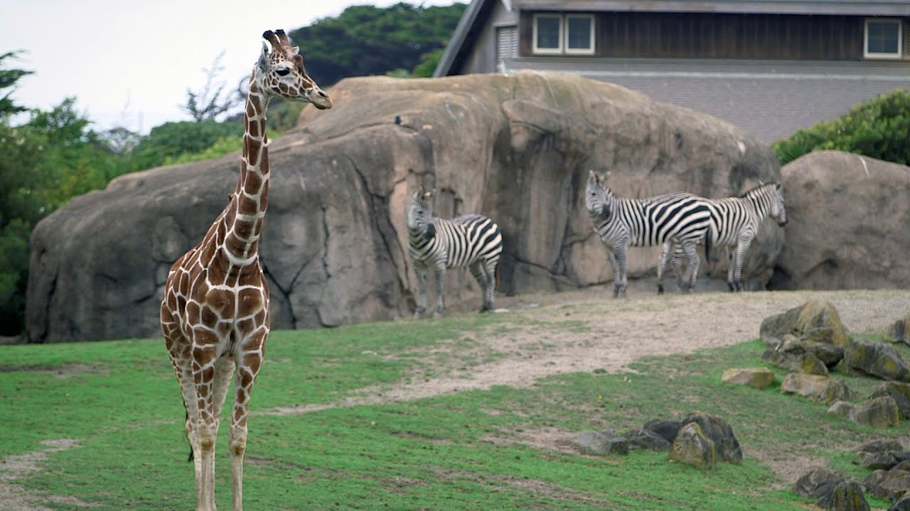 stanford students design and build enrichments for san francisco zoo animals