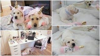 New Lab Puppy, Birthday Haul, Christmas Decor + Sad News
