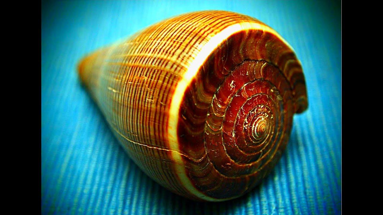 Snails Identification & Most Popular Land Snail Species - Pest Wiki