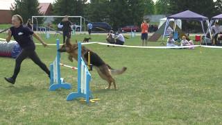 Змагання собак з аджиліті у Сумах