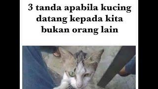 3 Sebab Kucing Mendatangi Rumah Kita