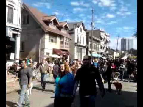 Brady Street 2011 Pet Parade 1