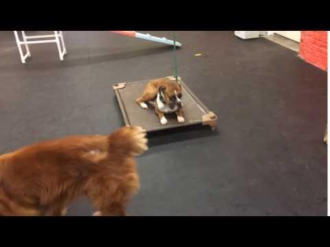 Training | Nico had a tendency of resource guarding | Solid K9 Training Dog Training