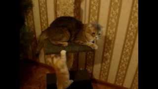 Кошкин дом своими руками(Кошкин дом своими руками., 2013-01-17T09:40:46.000Z)