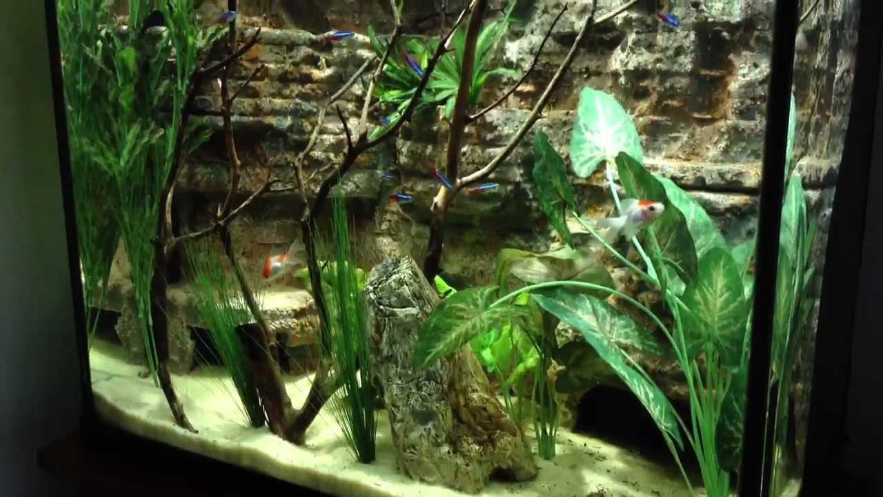 Tall 30 Gallon Aquarium