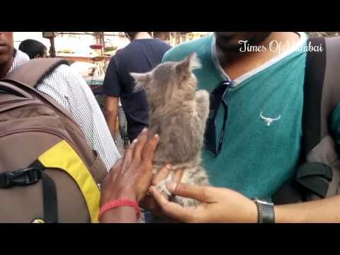 Very Cute Pets, Labradors & Persian Cats For Sale In Crawford Market Mumbai