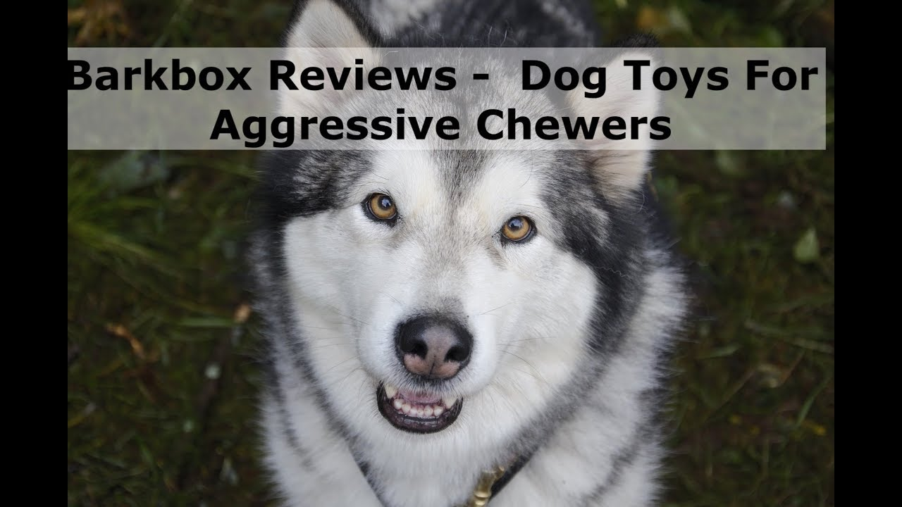 Barkbox Reviews - Dog Toys For Aggressive Chewers - YouTube | Dog Toys For Extreme Chewers