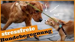 Hundebegegnungen an der Leine/ 3 Tipps für stressfreie Hundebegegnungen /An Hunden vorbeigehen