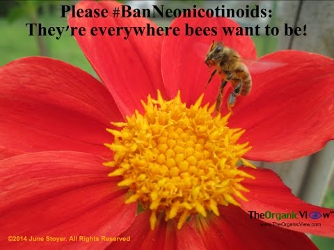 Canadians Ban Deadly Bee Killing Neonicotinoid Pesticide