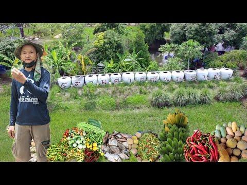 เปลี่ยนทุ่งนามาทำเกษตรผสมผสาน!!สร้างแหล่งอาหารมีรายได้มีกินมีใช้ทุกๆวัน