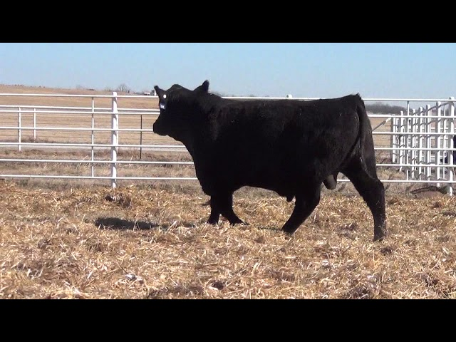 Express Ranches Lot 84