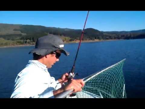 Murray Cod Blowering Dam