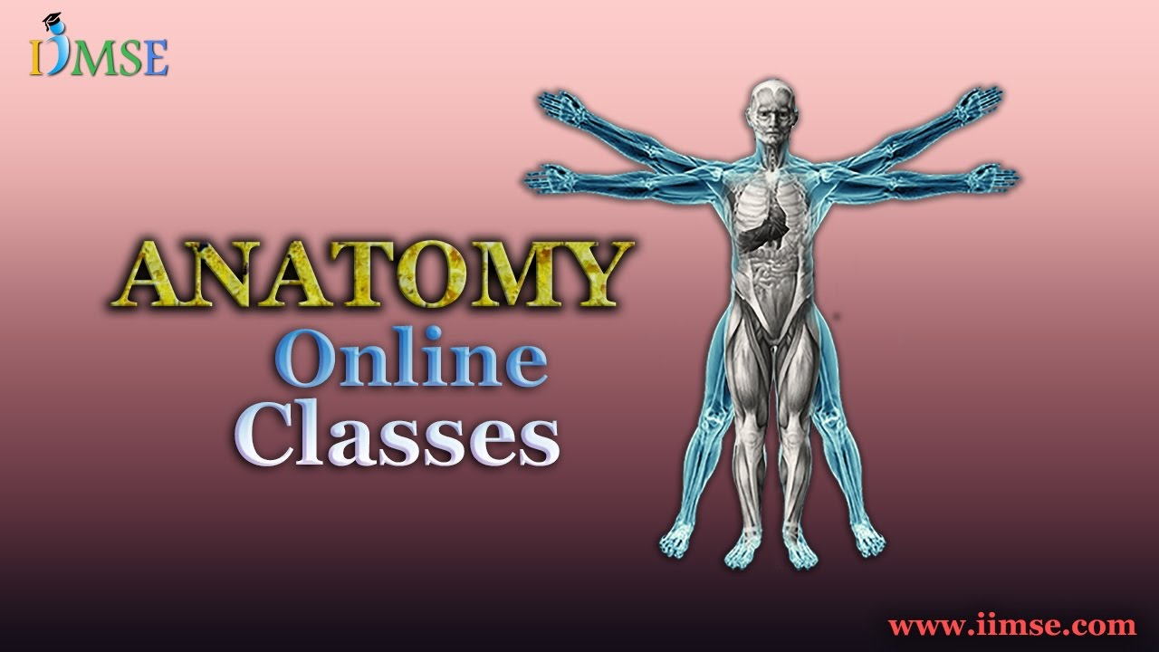Really Interactive Anatomy Online Classes Video Tutorial For