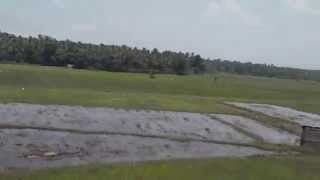 Paddy Fields and Rice Cultivation in Kerala