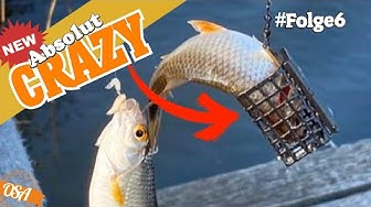 CRAZY! Die Fische DREHEN durch! Mission Friedfisch Angeln!