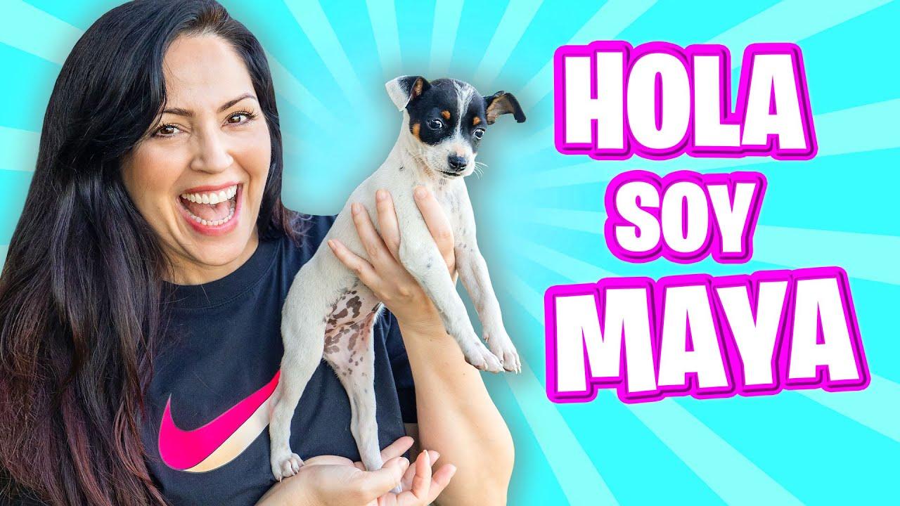 HOLA SOY MAYA! 🎁 PERRITO BEBE 😍 SORPRESA EPICA a Mia por su Cumpleaños 🔥 Sandra Cires Art