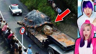 Abnormally Large Animals That Actually Exist!