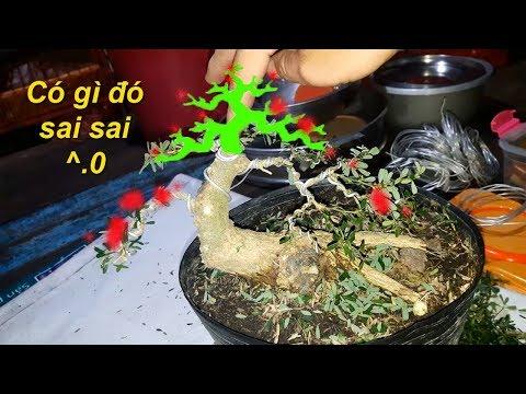 Chia sẻ cách tạo dáng bonsai