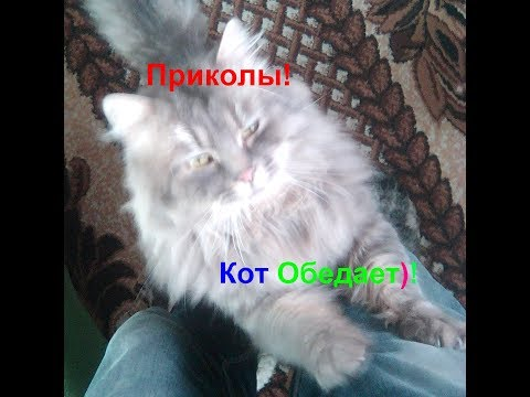 Приколы! Кот обедает!!! Funny Cat! Cat Lunches !!!