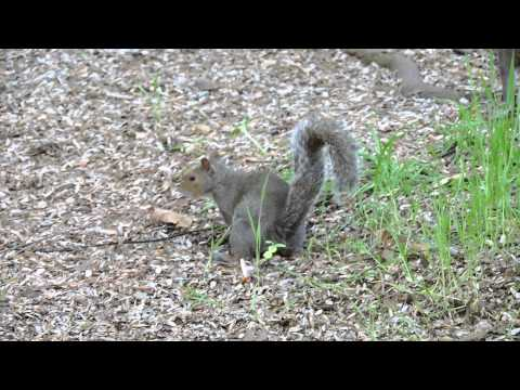Squirrel Dating for the Squirrel Single