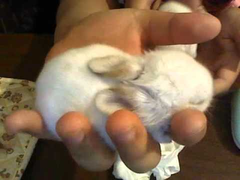 baby bunnies for sale !!