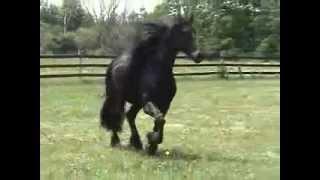 Лошади высшего класса