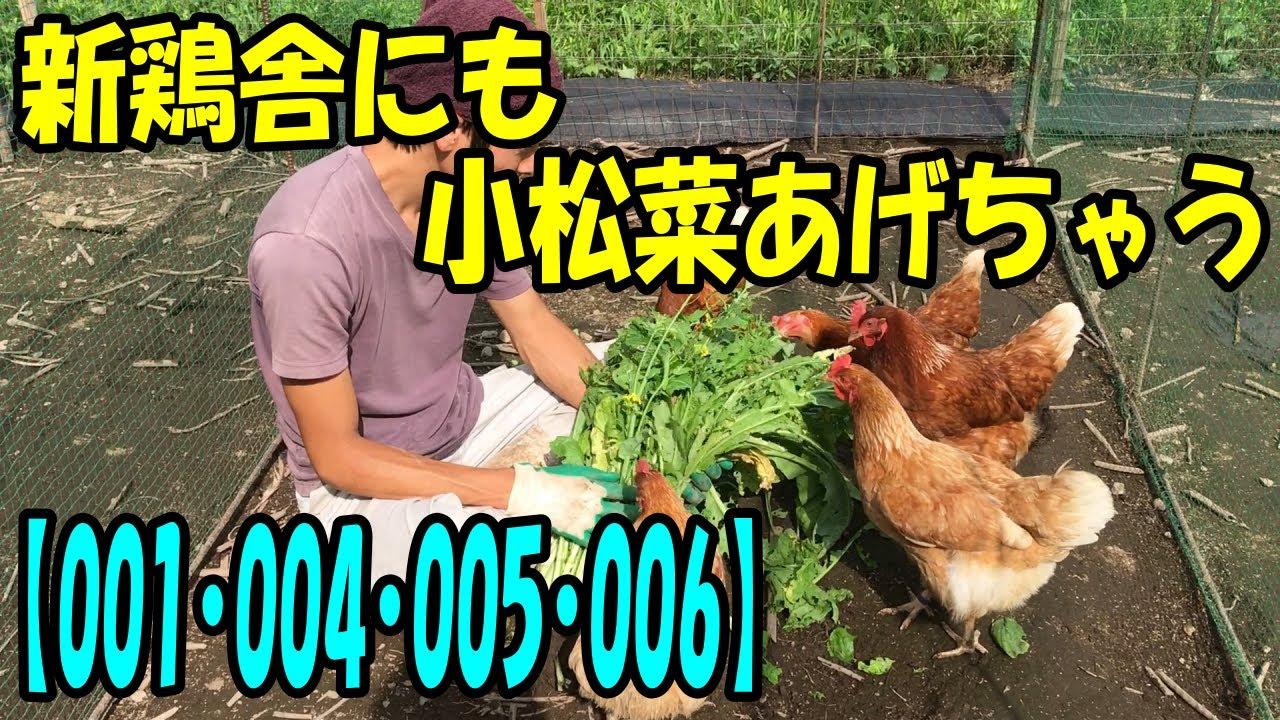 本日も、小松菜タイムです。【新鶏舎からお繋ぎします】