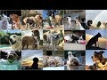 Green Doggie Girls | Dog Boarding San Fernando Valley [Video]