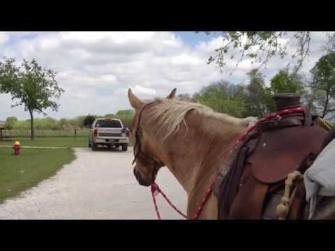 Why Get Off Your Horse Before You Get Home From A Ride - Rick Gore Horsemanship