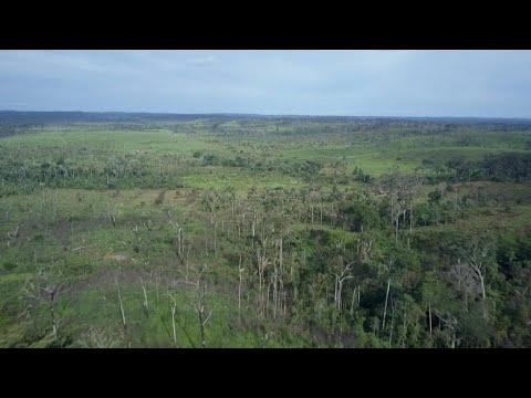 Focus - Bolsonaro presidency a threat to the Amazon?
