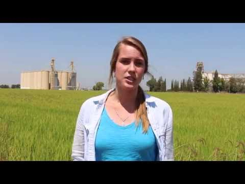 California Rice Intern Mary Allen on her experience