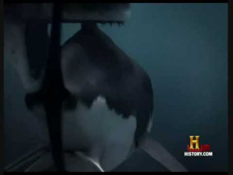 Megaladon vs Prehistoric Sperm Whales - YouTube
