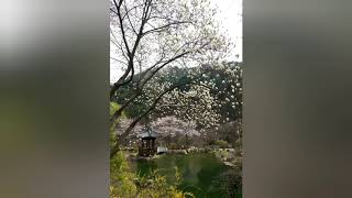 가평 아침고요수목원 4월 풍경 & 블라썸펜션