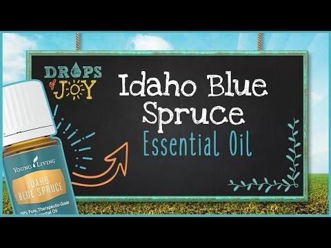 idaho-blue-spruce-essential-oil