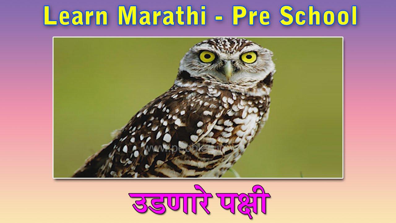Birds In Marathi Learn Marathi For Kids Marathi Grammar Marathi For Beginners Youtube