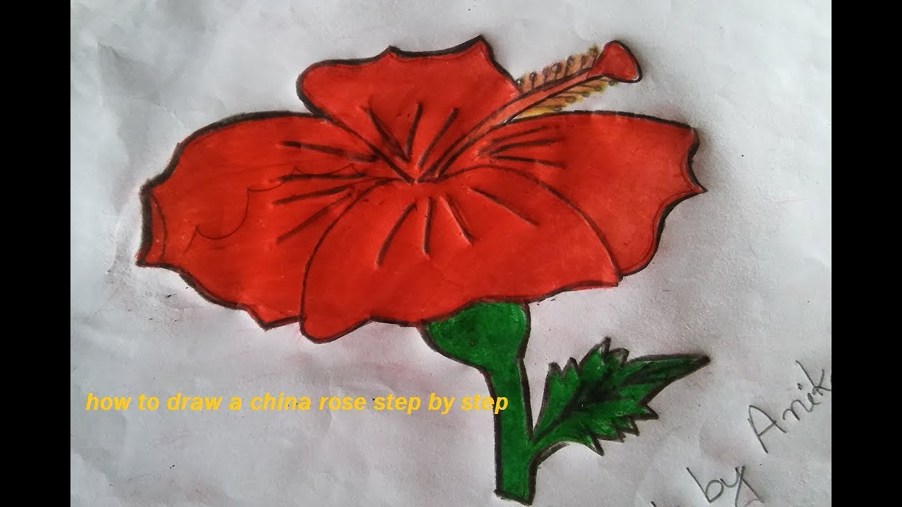How To Draw A China Rose Step By Step Draw Hibiscus Flower And