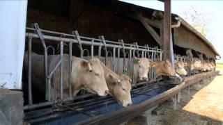Des éleveurs qui se donnent du temps (Solutions pour une activité et une vie équilibrées)