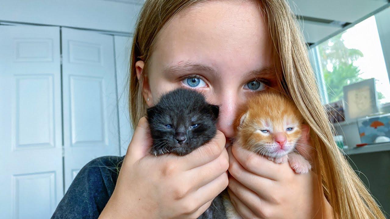 КОТЯТА !!! Котята РОДИЛИСЬ У Николь и Алисы и Евы