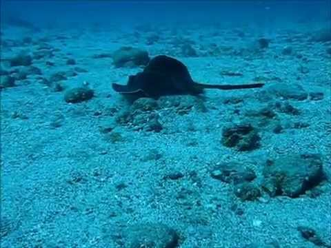 Diving at Coin de Mire Island (drop-off), Mauritius