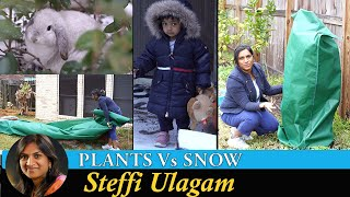 Protecting Plants from Snow | Steffi Ulagam