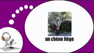 Французского видео урок = Деревья и природа(PARRAINEZ-MOI SI VOUS APPRÉCIEZ MON TRAVAIL / http://www.imagiers.net/support-me/ Изучение французского языка с мотивированным, ..., 2013-10-11T05:06:10.000Z)